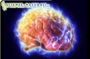 Proteina PKR incrementa la memoria e l'attività cerebrale