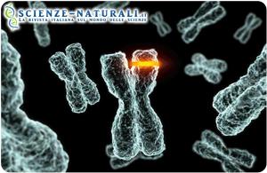 anomalia difetto genetico