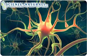 Cellule iPS: nuova tecnologia per lo studio dell'Alzheimer