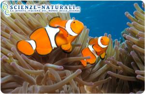 CO2 nell'acqua influisce sul sistema nervoso dei pesci