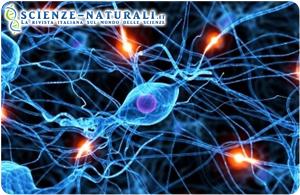 comunicazione cerebrale negli stati vegetativi