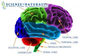 Decorso cerebrale: inizia superati i 45 anni