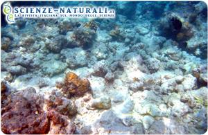 Effetti del CO2 nell'acqua