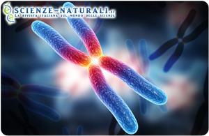 gene tumore ereditario del pancreas