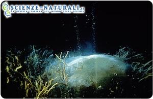 idrati di metano: pericolo mare