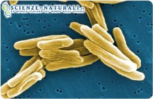 Tubercolosi Tbc allarme in India