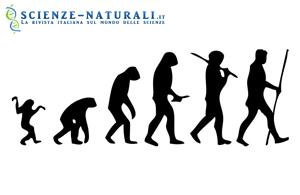teoria sull'evoluzione