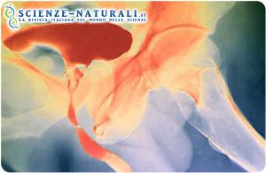 Screening prostata: rischi e pericoli con lo screening