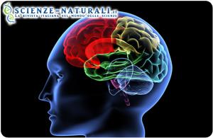 vitamina b12 e acido folico in aiuto alla memoria