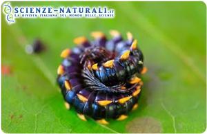 filippine-patrimonio-specie-viventi
