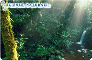 Foresta-pluviale-tropicale-Riserva-Monteverde-Costa-Rica