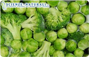broccoli-cavoletti