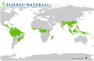 distribuzione-foreste-pluviali-tropicali