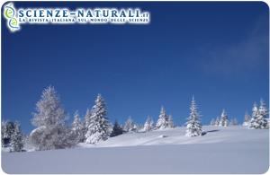 inverni-rigidi