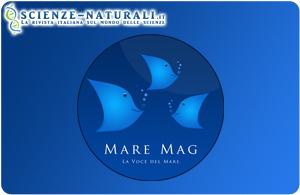 MareMag