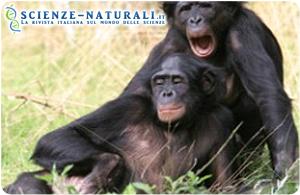 Lo sbadiglio contagioso delle scimmie bonobo è il risultato di una loro abilità empatica, basata forse sul cogliere in maniera inconscia uno stato emozionale espresso da un altro individuo del gruppo, meglio se legato da vincolo parentale o di amicizia.