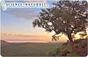 Scorcio di una parte dell'African Rift Valley
