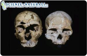 A sinistra: Cranio di Neanderthal (La Ferrassie); a destra: cranio di Cro-Magnon (primo moderno)   (fonte: Musée de l'Homme, Paris)