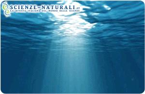 Secondo un nuovo studio, i modelli per la valutazione dell'anidride carbonica negli oceani del mondo hanno bisogno di una revisione. Le comunità planctoniche superficiali sono molto più ricche di carbonio di quanto sia stato a lungo ritenuto. (fonte: Sciencedaily)