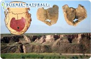 In basso: Panorama del sito di Xujiayao; in alto: vista interna ed esterna degli 11 pezzi di cranio la cui posizione è evidenziata nel disegno del cranio completo (fonte: Erik Trinkaus/ Washington University di St Louis - WUSTL – Sciencedaily)