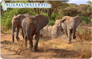 Elefanti nei pressi del lago Manyara (fonte: Sciencedaily)