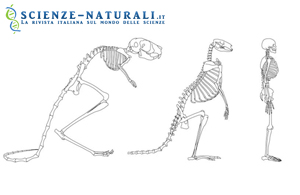 confronto-scheletri