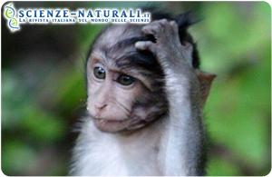 sviluppo-primati