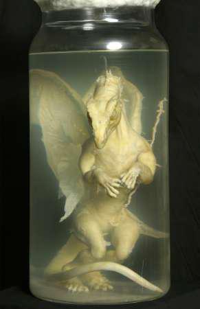 Cucciolo di drago sotto formalina.