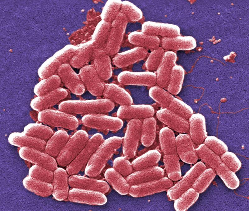 Batteri. Fonte CDC
