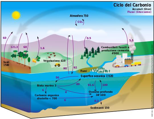 Ciclo classico del carbonio (Fonte Wikipedia)