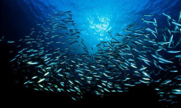 """""""...da un mare pieno di pesci"""""""
