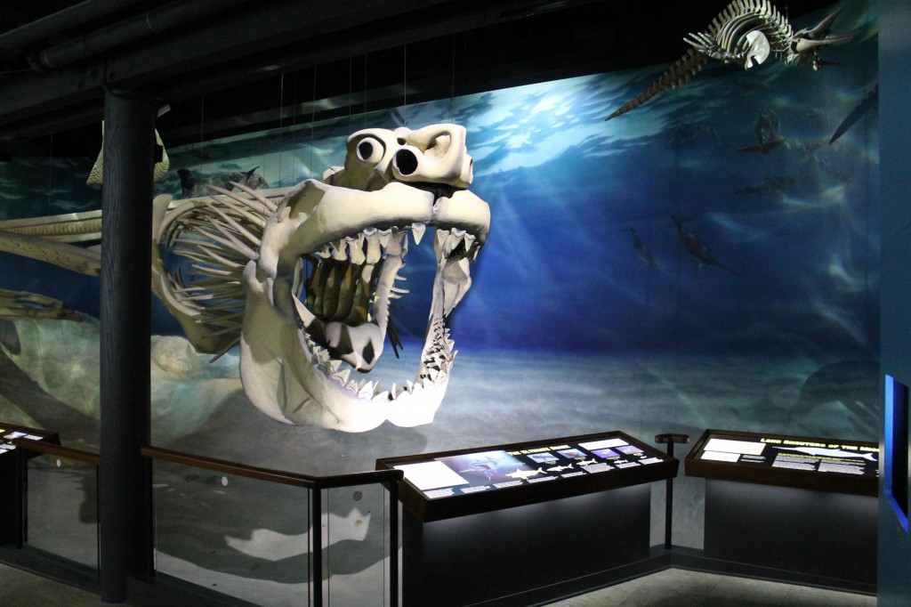 Riproduzione del Megalodonte presso il Museo di Calvert, USA (Fonte: Calvert Marine Museum)
