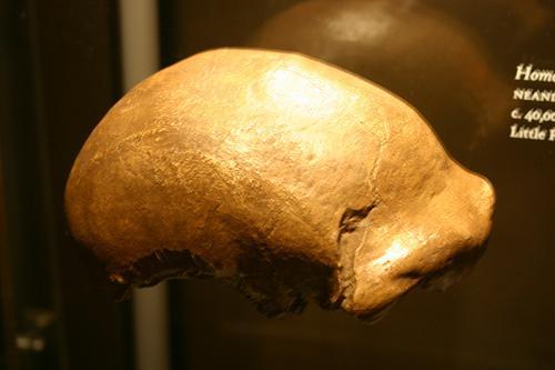 Resti di calotta cranica di Neanderthal, si noti l'arcata sopracigliare. (Wikimedia, Somma 1980)