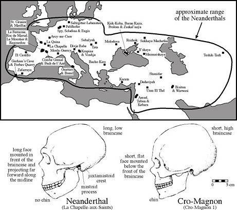 In alto l'areale di diffusione del Neanderthal, la linea superiore identifica anche il limite dei ghiacci. Sotto le differenze dei crani tra Neanderthal e Cro-magnon (sapiens). (Fonte R. Klein)