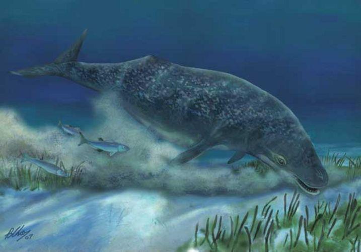 origine-balene
