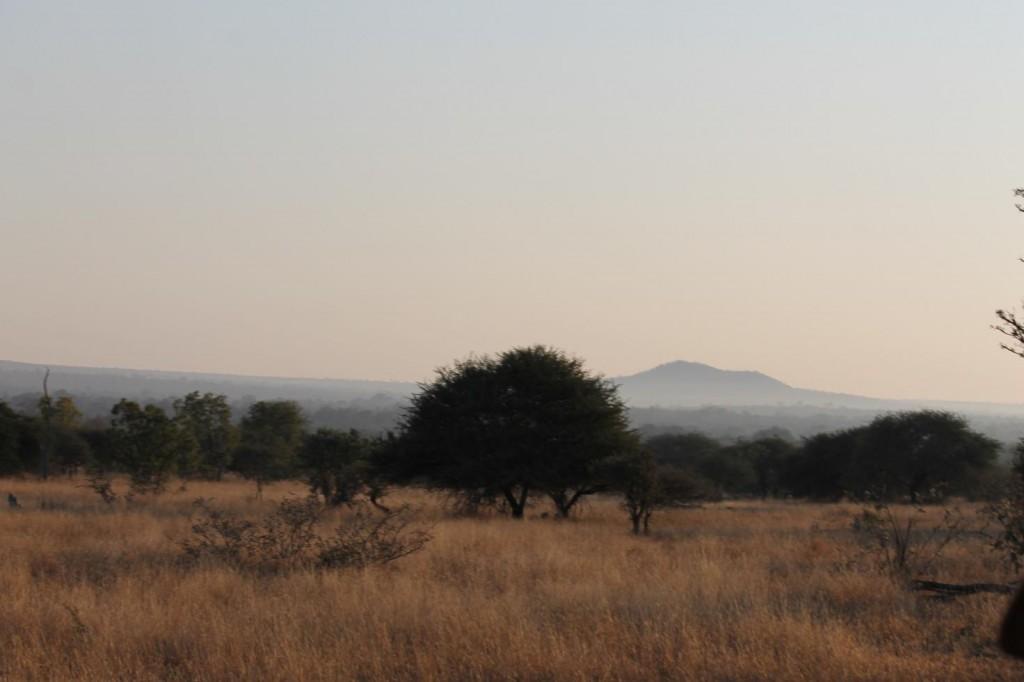 Savana sudafricana (foto di M.C. Giuditta)