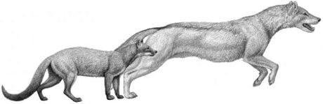 Hesperocyon e Sunkahetanka, due canidi nordamericani estinti.Credit:(Mauricio Antò)