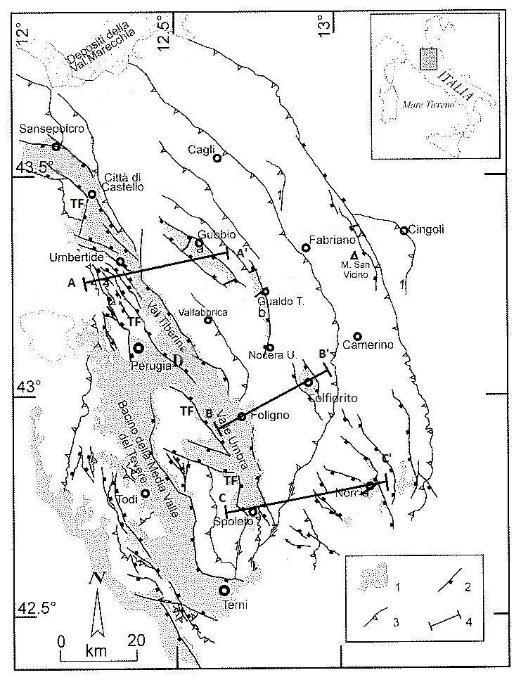 Figura 1 - Schema strutturale dell'Appennino Umbro (modificato da: BARCHI e al., 1999b); 1) Bacini neo-autoctoni pliocenico-quaternari; a) Gubbio; b) Gualdo Tadino; c) Colfiorito; d) Norcia; e) Cascia; f) Castelluccio; 2) Faglie dirette; 3) Sovrascorrimenti e faglie inverse; 4) Traccia della sezioni sismica-geologica riportata in figura 2.TF = Faglia Tiberina