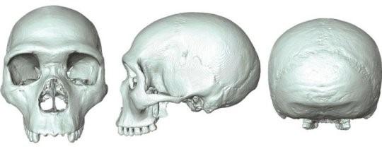 Il fossile virtuale dell'ultimo antenato comune di Homo sapiens e Neanderthal(credit: Aurélien Mounier)