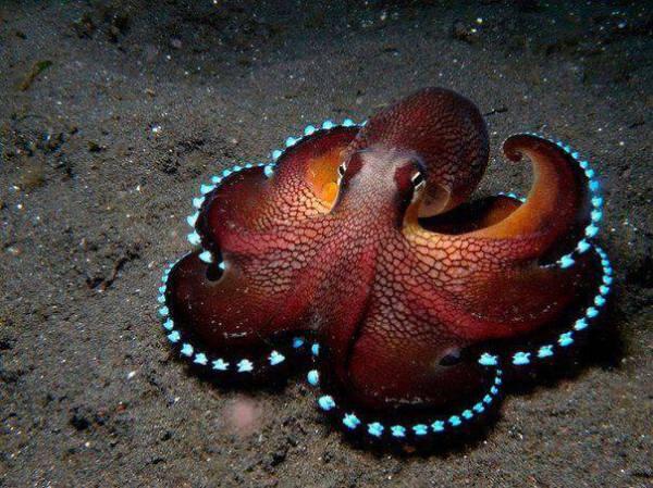 coconut-octopus-1