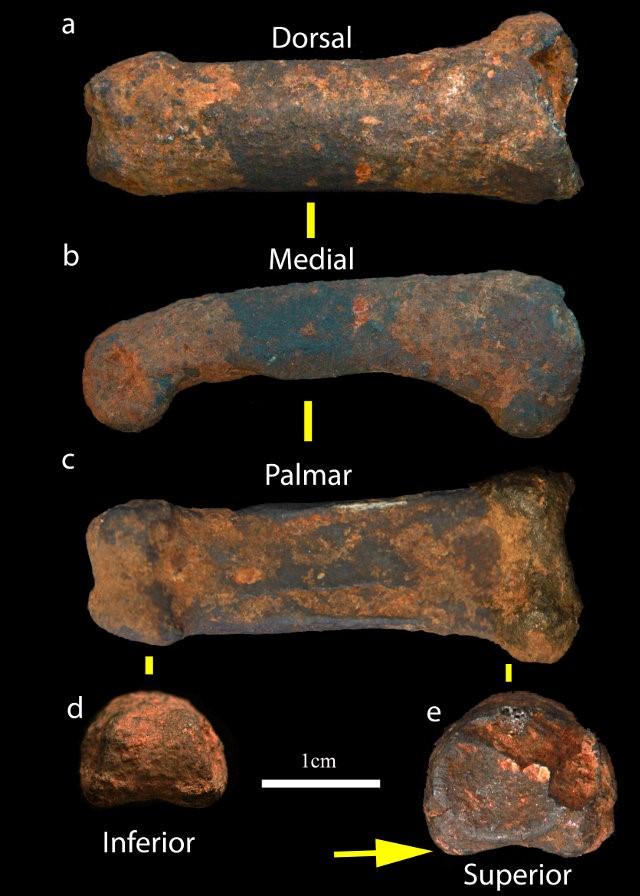 L' osso del dito rinvenuto nelle grotte di Sterkfontein(credit: Jason Heaton)