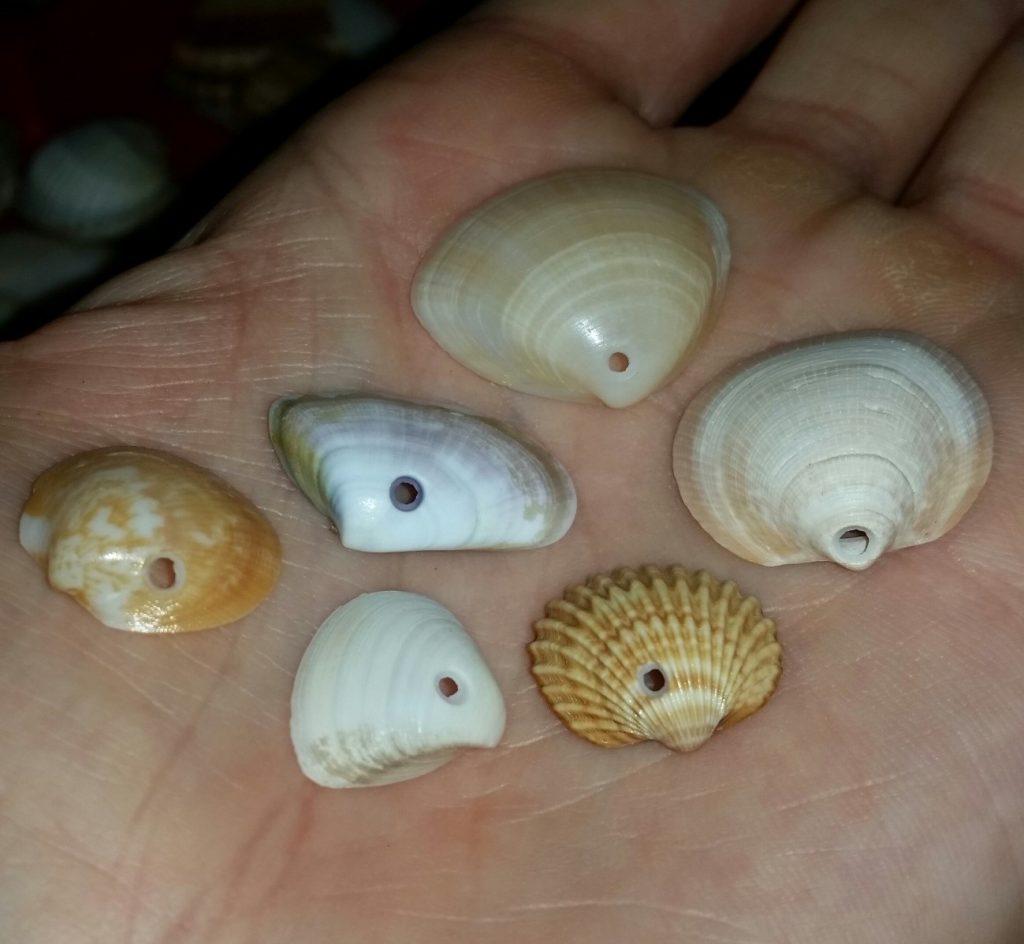 Valve di diverse specie con il caratteristico foro da predazione (Ph. Andrea Bonifazi).