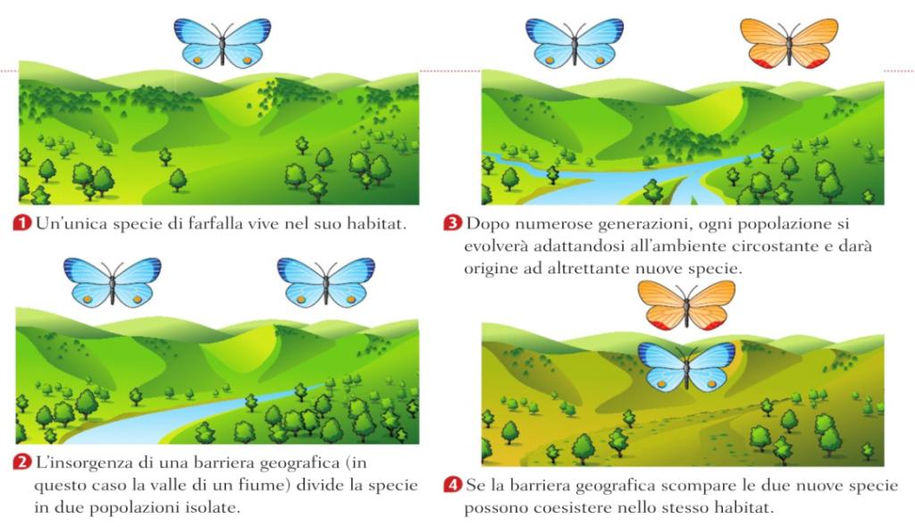 Semplice esempio di come avviene la speciazione, cioè l'origine di nuove specie